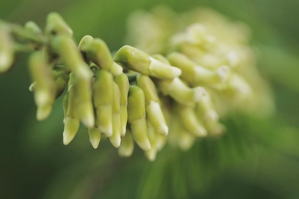 クララ 平尾台の花図鑑