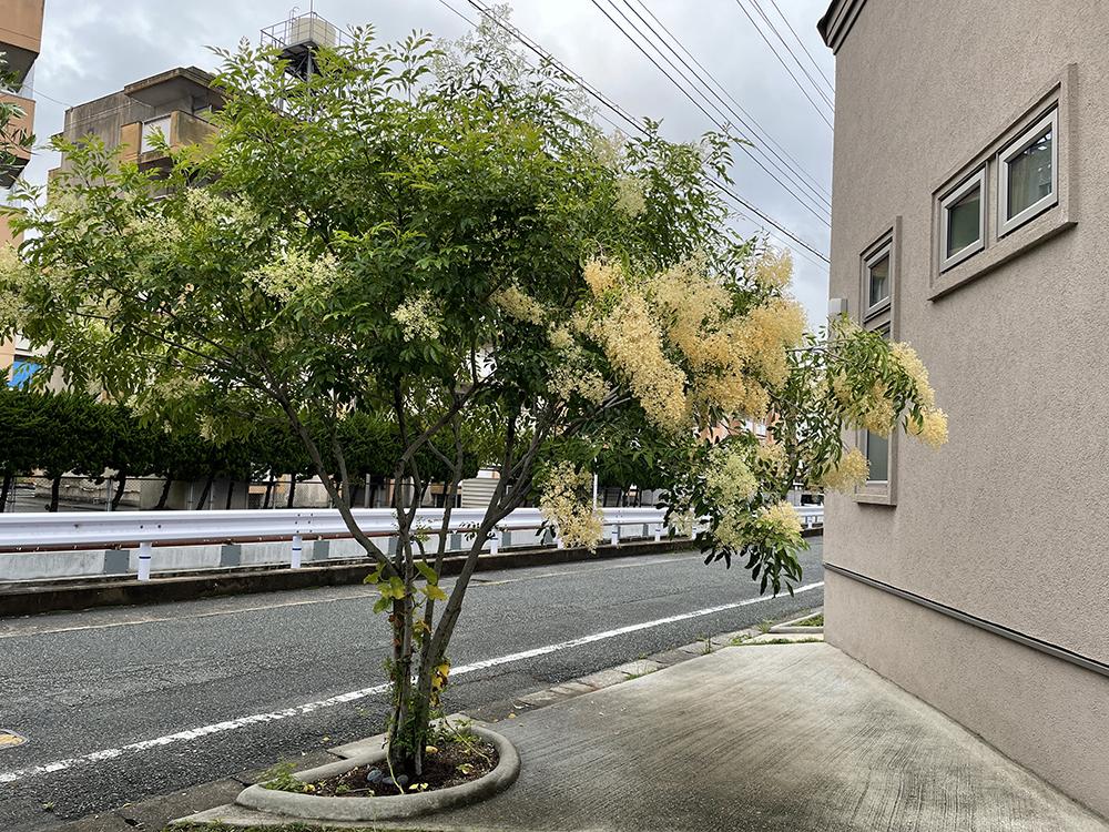 北九州 ホームページ制作会社 株式会社ジャム 花ブログ