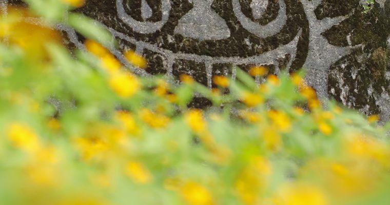 多々良木バス停の苔アートと黄帝菊(メランポジウム)