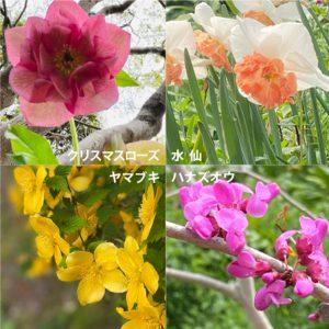北九州 ホームページ制作 株式会社ジャム 白野江植物園の花