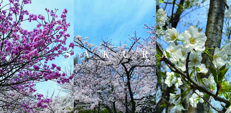 花散策 白野江植物公園